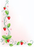 Ripe strawberries and green leaves with flowers. Vector illustration border Stock Image