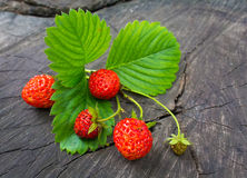 Ripe strawberries and green leaves Royalty Free Stock Images