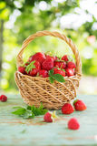 Ripe strawberries with leaves in a basket Royalty Free Stock Photography