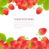 Ripe strawberries with leaves Stock Images