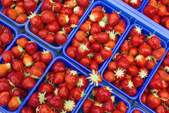 Ripe strawberries in plastic bowls Royalty Free Stock Images