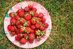 Ripe strawberries on the plate among grass Stock Image