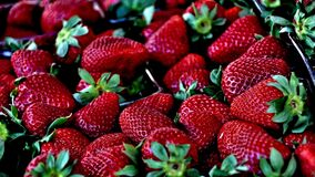 Ripe strawberries in punnet Stock Images