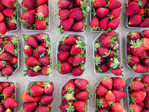 Ripe Strawberries in Punnets Royalty Free Stock Photography