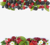 Ripe strawberries, raspberries, blueberries, blackberries. Mint and basil leaves. Berries at border of image with copy space for text. Background berries. Top Royalty Free Stock Photography