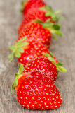 Ripe strawberries in a row Royalty Free Stock Images