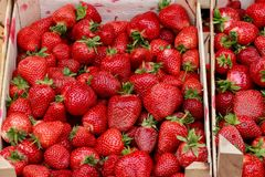 Strawberries packed and ready for transport royalty free stock image