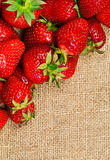 Ripe strawberries Stock Images