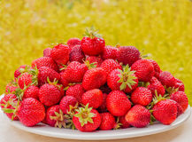Ripe strawberries on a white plate. Lots of red berries. Blurred green and yellow background Royalty Free Stock Photography