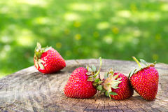 Ripe strawberries on wood in the garden. Red sweet strawberryies on a wooden block with garden background Royalty Free Stock Photo