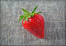 Ripe strawberry close-up on a rough cloth Royalty Free Stock Photography