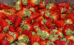 Ripe strawberry closeup in a heap royalty free stock photography