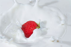Ripe strawberry falling into the milk with splash Royalty Free Stock Photos