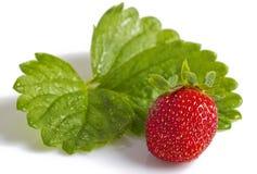 Ripe strawberry. Stock Photography