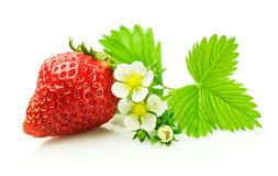 Ripe strawberry with leaf and blossom Stock Images