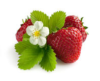 Ripe strawberry with leaves and blossom Stock Image