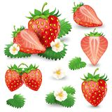 Ripe strawberry with leaves and blossom vector set. Set of whole and cut in half ripe strawberry with leaves and blossom realistic vector illustration isolated Stock Photography