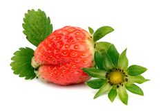 Strawberry with leaves. Isolated on white. Ripe strawberry with leaves isolated on a white royalty free stock photography