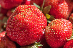 Ripe strawberry. A minute ago removed from a bush Stock Photo