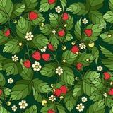 Ripe strawberry pattern Stock Photos