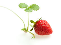 Ripe strawberry and sprout Stock Images