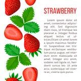 Ripe strawberry. stripe with description text. Concept idea Stock Images
