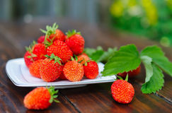 Ripe strawberry on a white plate. Royalty Free Stock Photography