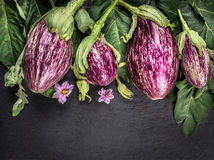 Ripe striped eggplants with leaves and flowers on dark slate table. Vegetables background, top view royalty free stock images