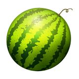 Ripe striped watermelon realistic juicy vector illustration natural green isolated ripe melon. royalty free stock photography