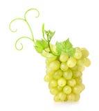 Ripe sultana grapes Stock Photos