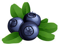 Ripe summer blueberry with leaves Royalty Free Stock Photo