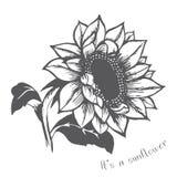 Ripe sunflower vector illustration