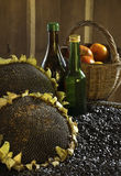 Ripe sunflowers and sunflower seeds Royalty Free Stock Images