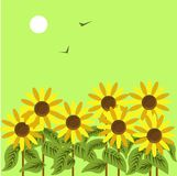 Ripe sunflowers under dim sun in green sky with birds. Ripe sunflowers under dim sun in green sky with black birds that fly away vector illustration. Yellow Stock Photo
