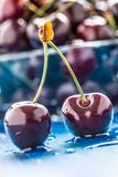 Ripe sweet cherries on blue woden table with water drops stock image
