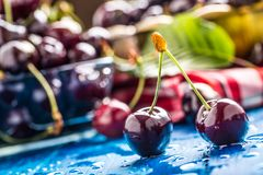 Ripe sweet cherries on blue woden table with water drops royalty free stock images