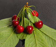 Ripe sweet cherry Royalty Free Stock Photography