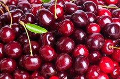 Ripe sweet cherry Stock Photos