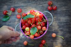 Ripe sweet cherry in small bucket Royalty Free Stock Photography