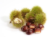 Ripe Sweet Chestnuts. Heap of sweet chestnuts with capsules on bright background Stock Photography