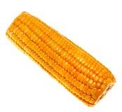 Ripe sweet corn Stock Image