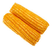 Ripe sweet corn i. Solated on a white background Royalty Free Stock Photography
