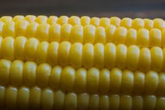 Sweet fresh corn close up stock photos