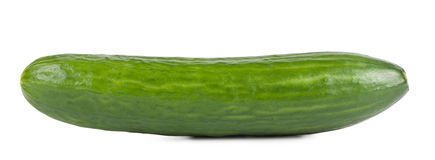 Ripe sweet green cucumber Stock Photography