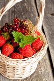Ripe sweet strawberries, currants in wicker basket and mint leav Royalty Free Stock Photo