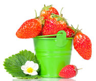 Ripe sweet strawberries Stock Photography