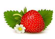 Ripe sweet strawberry and flower with leaves. Royalty Free Stock Images