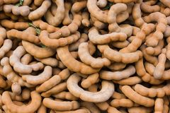 Ripe sweet tamarind fruits stock photography