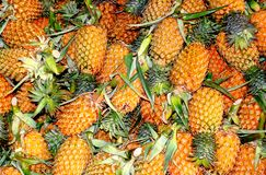 Exotic yellow pineapples royalty free stock images