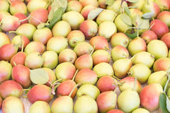Ripe sweet yellow red pears background royalty free stock photography